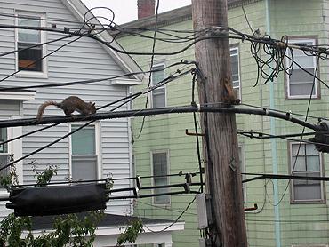 Electricsquirrel