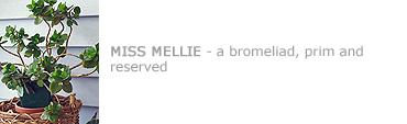 Missmellie
