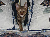 Oliver between the pillows2005_03_14c