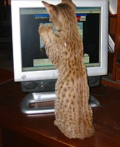 Ollie Playing Computer Game